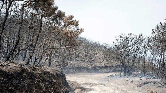 pantelleriaincendio1